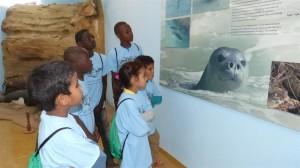 Varios escolares contemplan un panel sobre la foca monje en el centro de visitantes de la Reserva Satélite de Cabo Blanco (Mauritania). Foto: Fundación CBD-Hábitat.