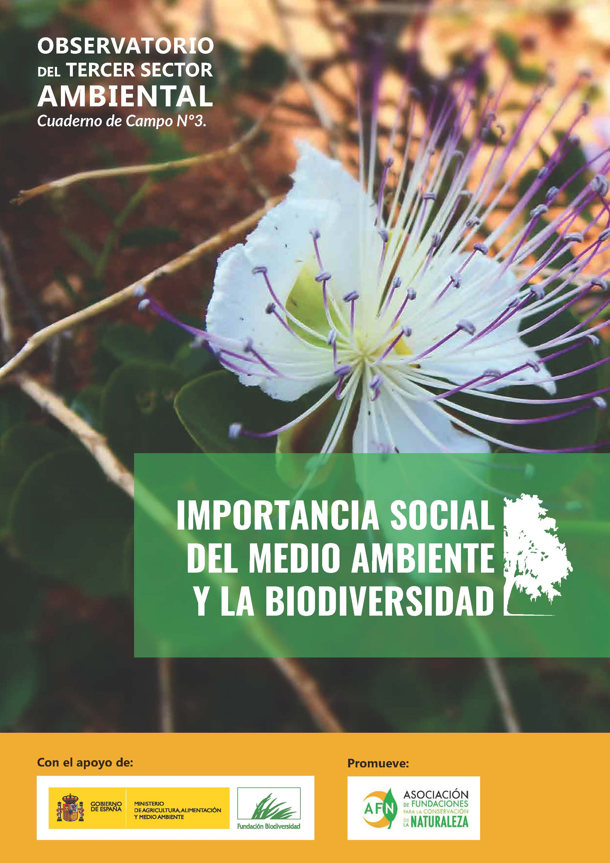 3º Informe_Tercer_Sector_Ambiental