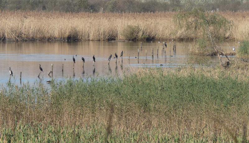 Programa Anillo Verde Bahía de Santander - Reserva Marisma de Alday (FNyH)
